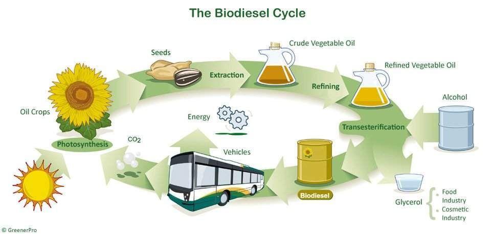 Bio diésel