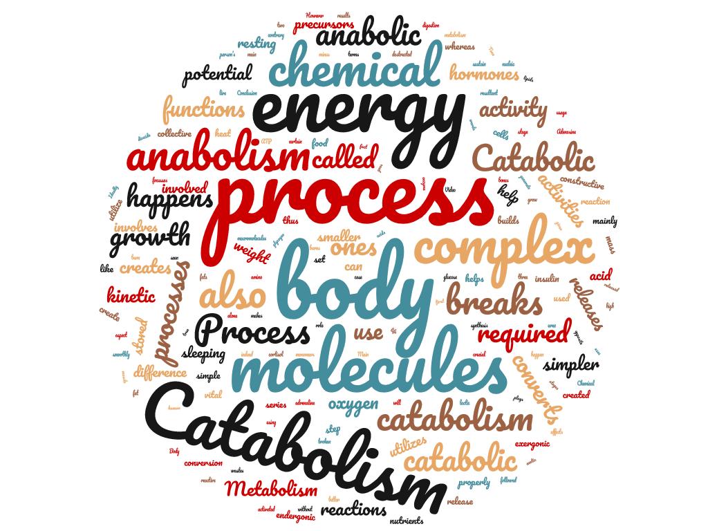 Diferencia entre anabolismo y catabolismo