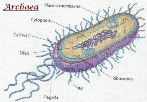 Estructura de Archaea