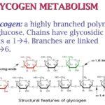 Diferencia entre glucógeno y almidón (con tabla)
