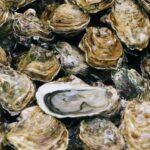 Diferencia entre ostras y almejas (con tabla)